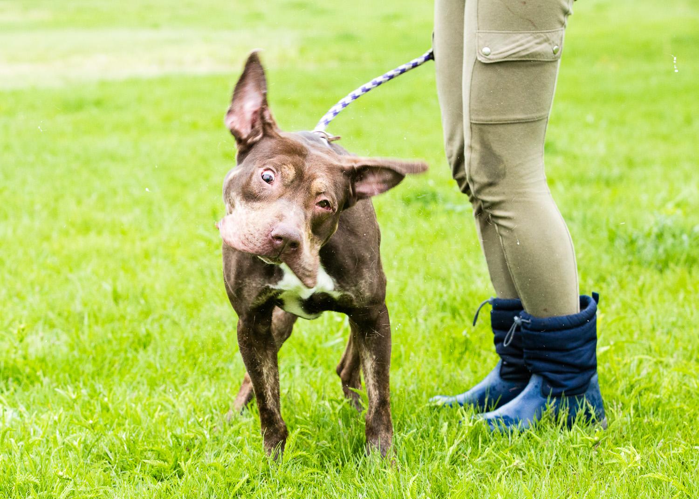 dog-foster-05-17-14-figaro-3