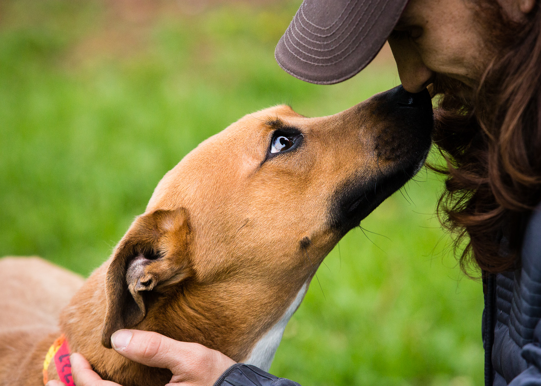 dog-foster-05-17-14-ramses-1