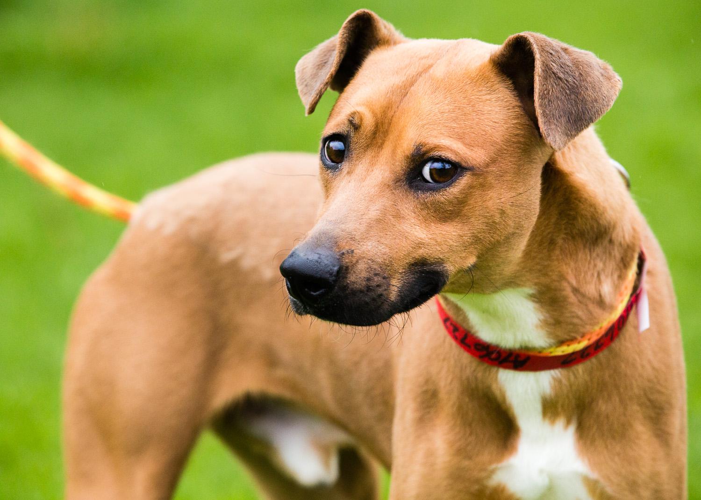 dog-foster-05-17-14-ramses-2