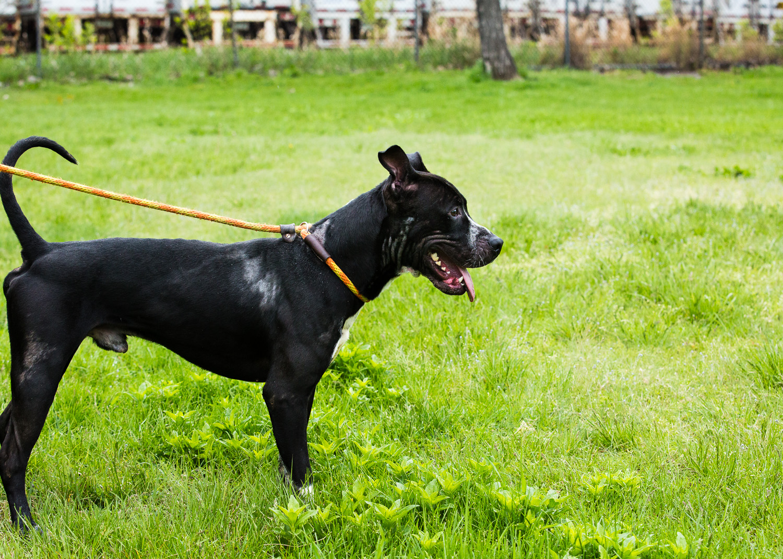 dog-foster-05-17-14-max-1