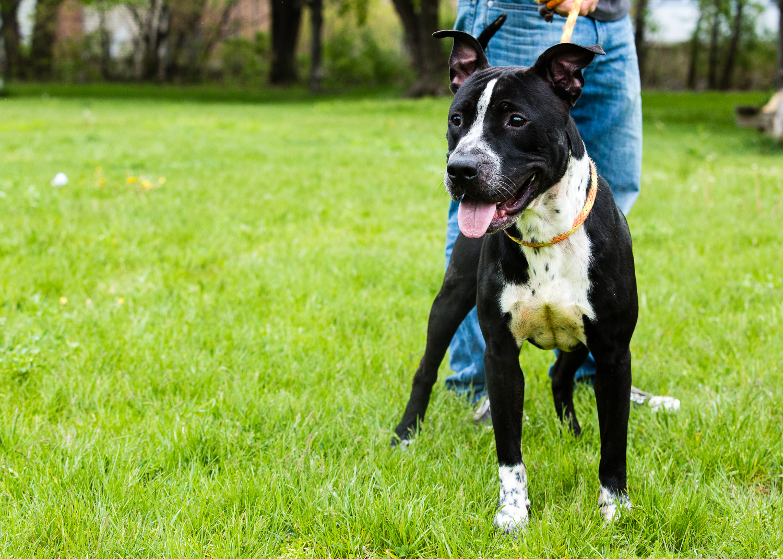 dog-foster-05-17-14-max-2