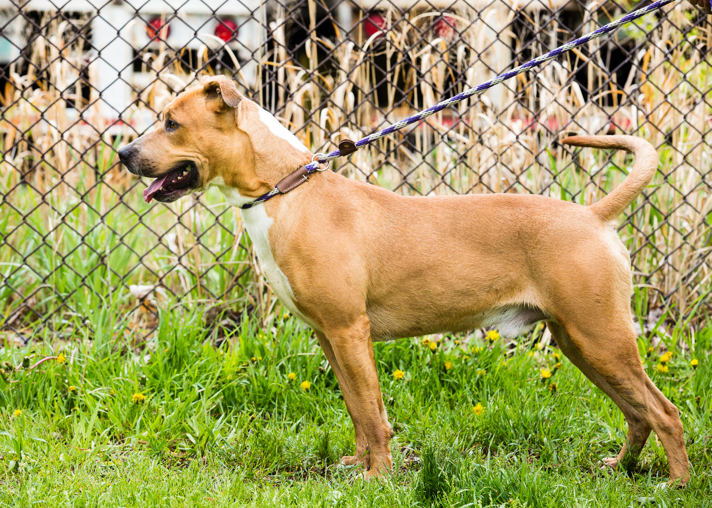 dog-foster-05-17-14-larry-1