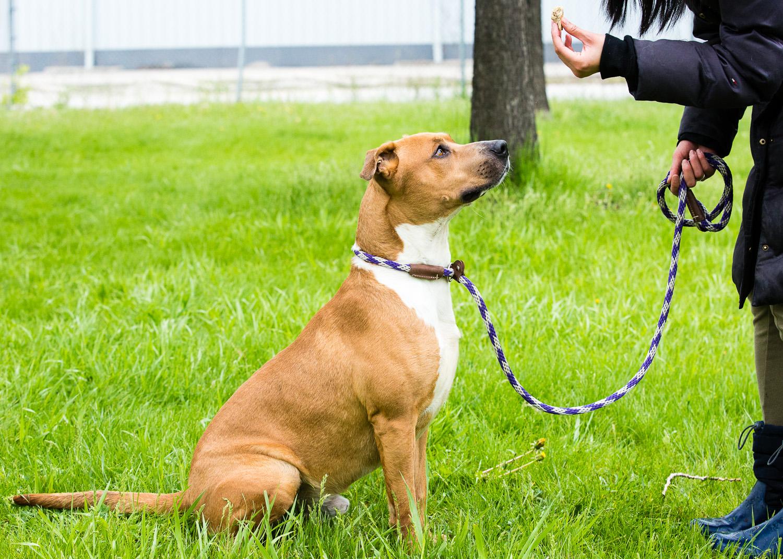 dog-foster-05-17-14-larry-2