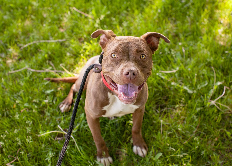 dog-adoptable-05-30-14-dandelion-2