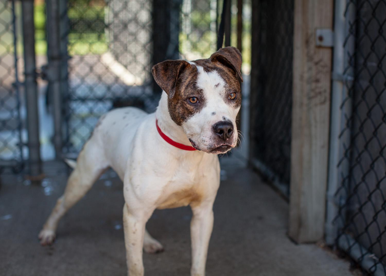 dog-adoptable-05-30-14-flynn-3