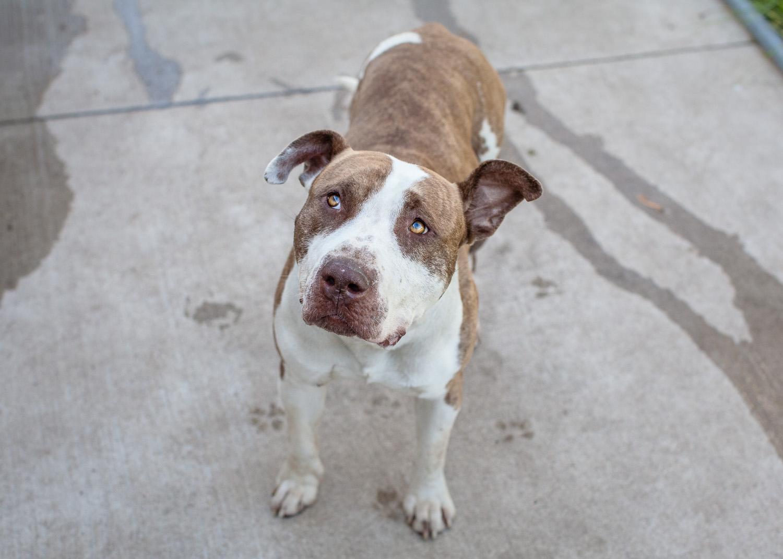 dog-adoptable-05-30-14-luigi-2