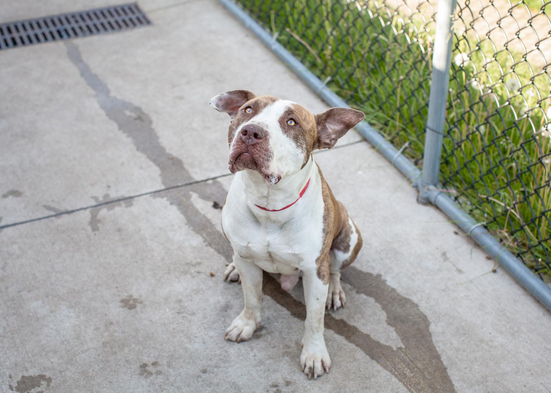 dog-adoptable-05-30-14-luigi-3