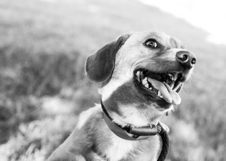 dog-adoptable-05-30-14-buddy-1