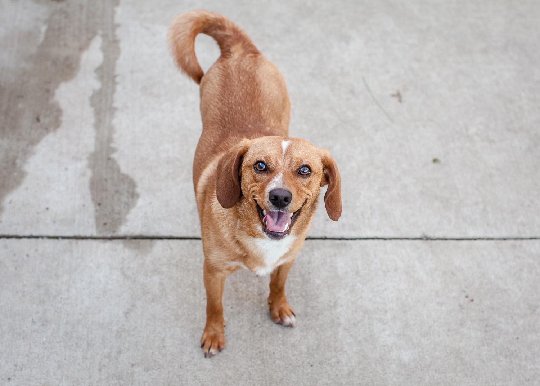 dog-adoptable-05-30-14-buddy-2