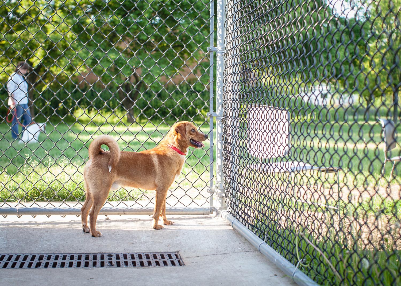 dog-adoptable-05-30-14-buddy-3