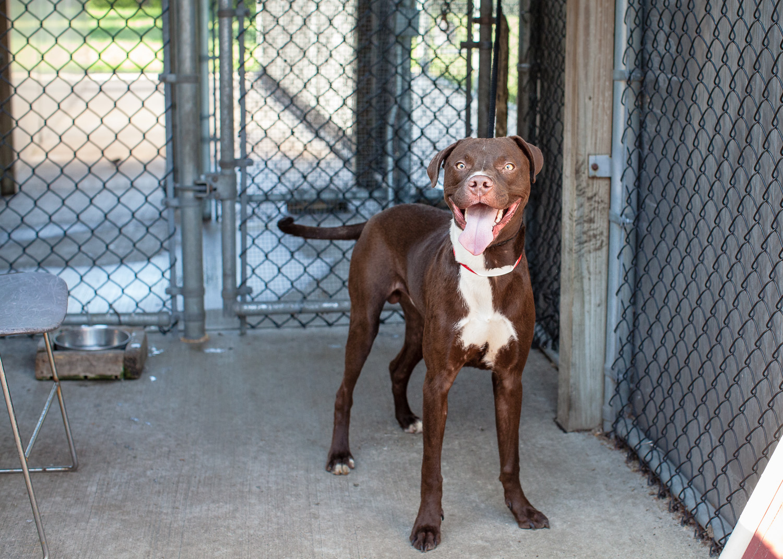 dog-adoptable-05-30-14-chuck-2