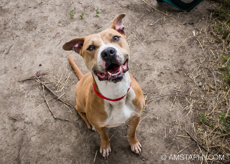 dog-adoptable-06-15-14-eva-2