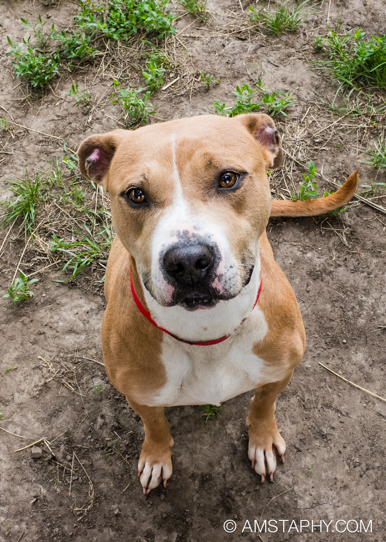 dog-adoptable-06-15-14-eva-1