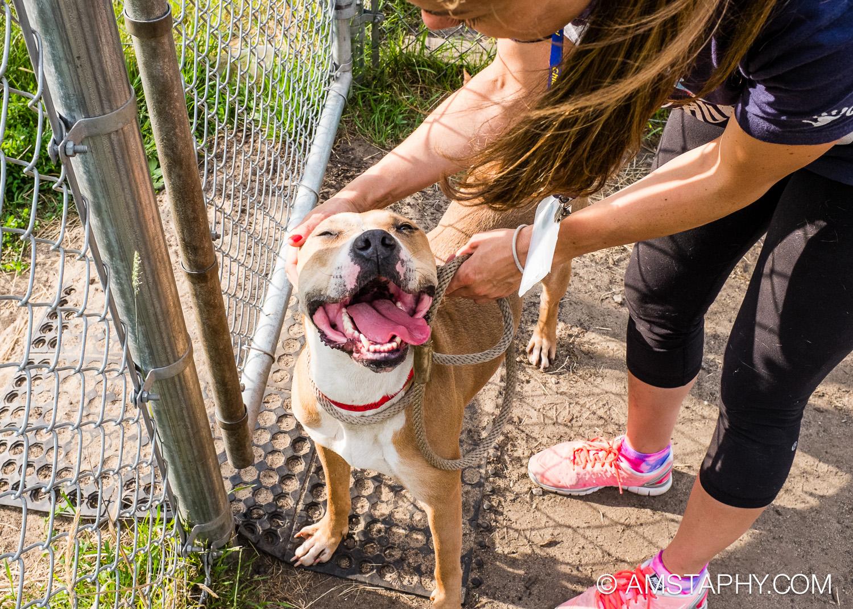 dog-adoptable-06-15-14-eva-4