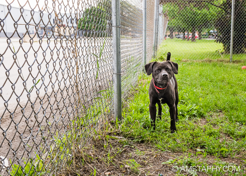 dog-adoptable-06-15-14-louis-1