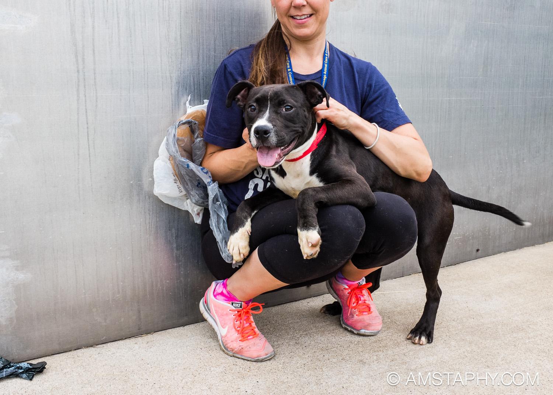 dog-adoptable-06-15-14-aggie-2