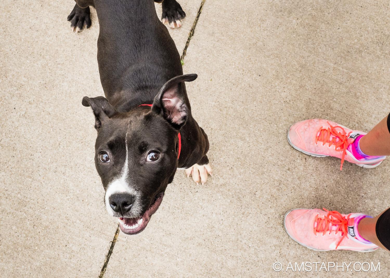 dog-adoptable-06-15-14-aggie-1