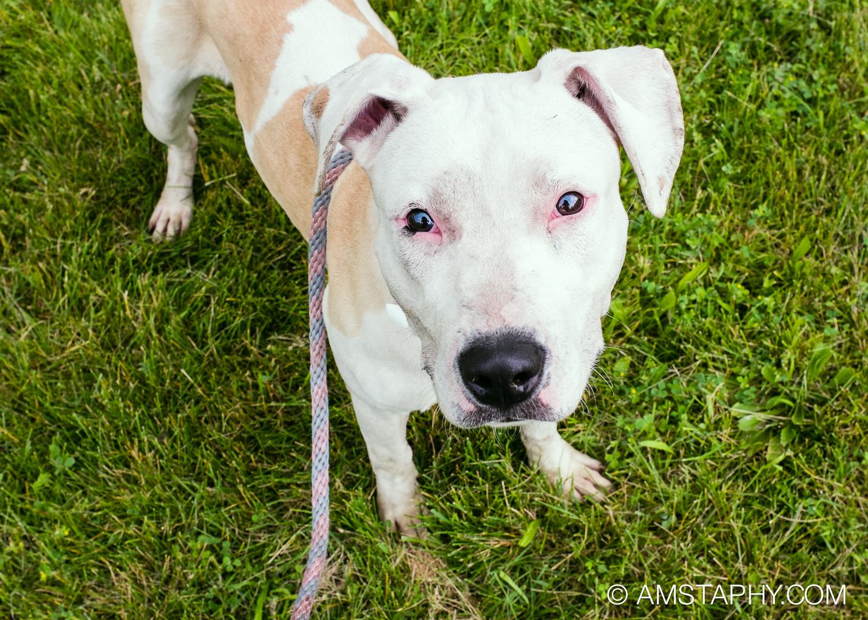 dog-adoptable-06-26-14-happy-2