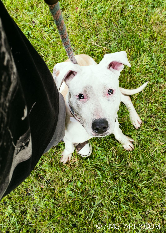 dog-adoptable-06-26-14-happy-1