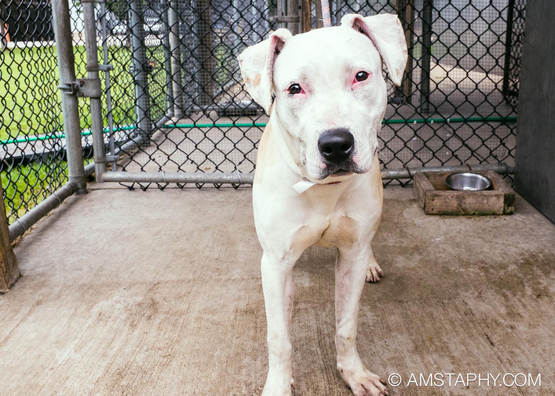 dog-adoptable-06-26-14-happy-4