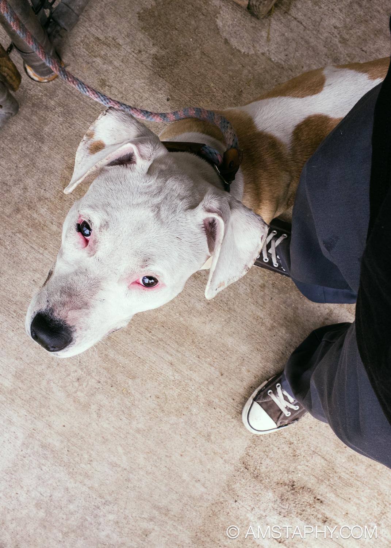 dog-adoptable-06-26-14-happy-5