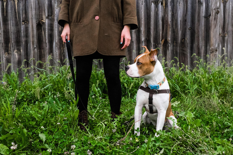 Dog portrait in yard