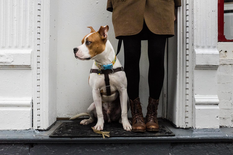 Urban dog portrait