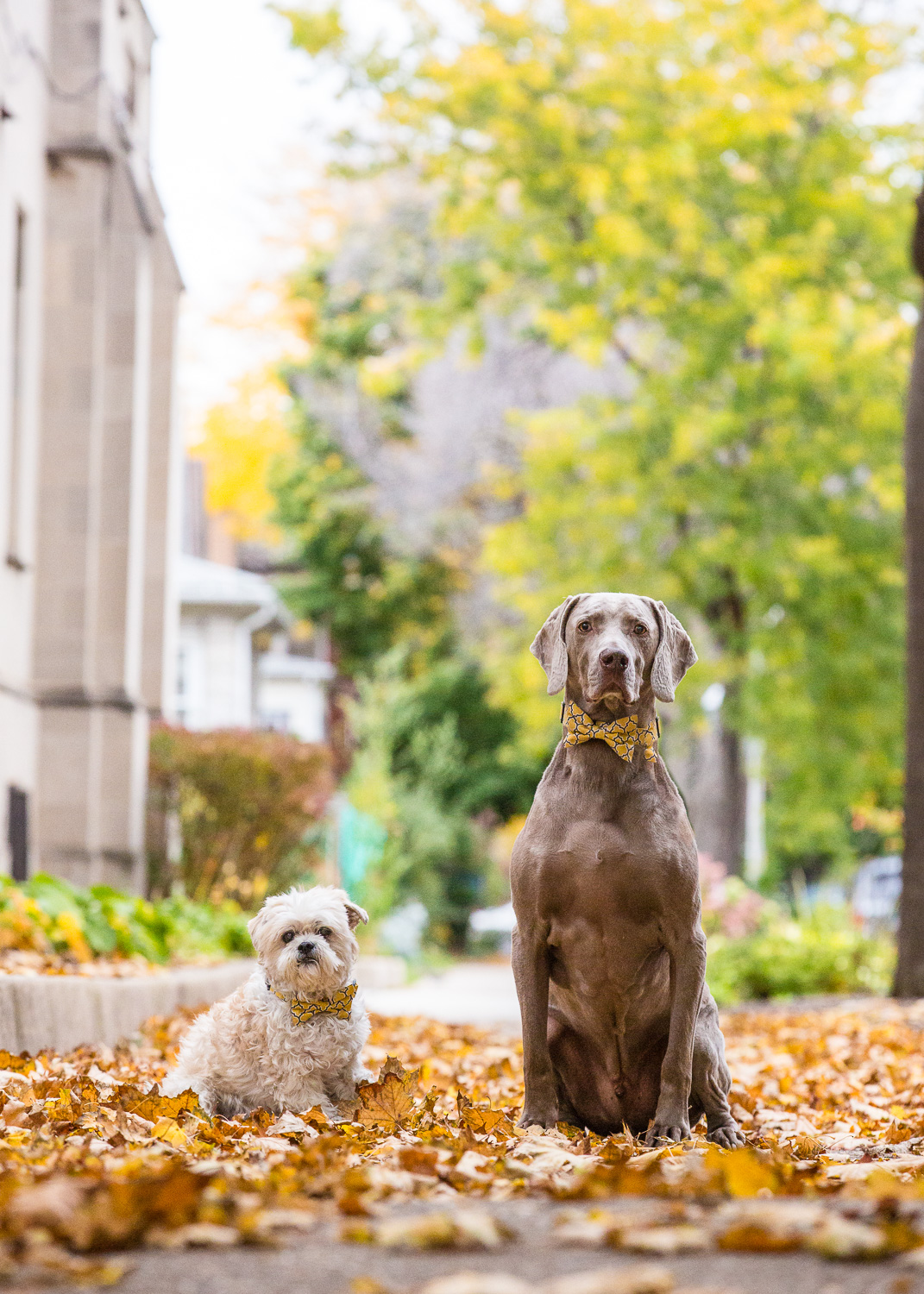 Dog photography of two dogs on the street.