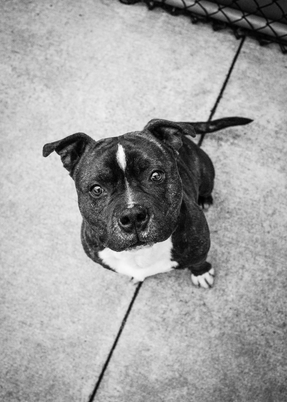 Chicago Dog Photography