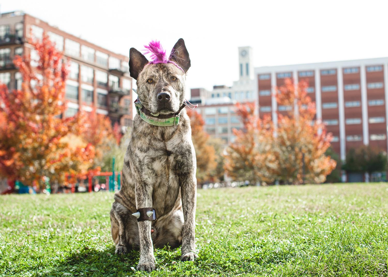 Halloween Dog Photography