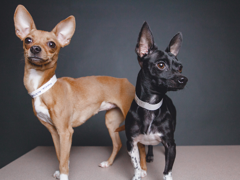 Muñeca and Petey, CACC