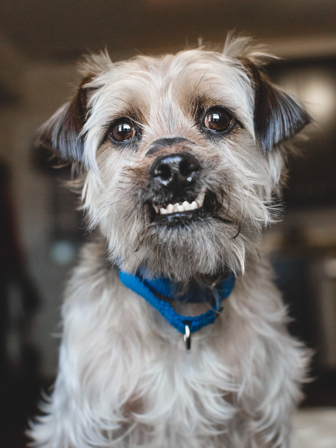 Adoptable Terrier Mix In Chicago