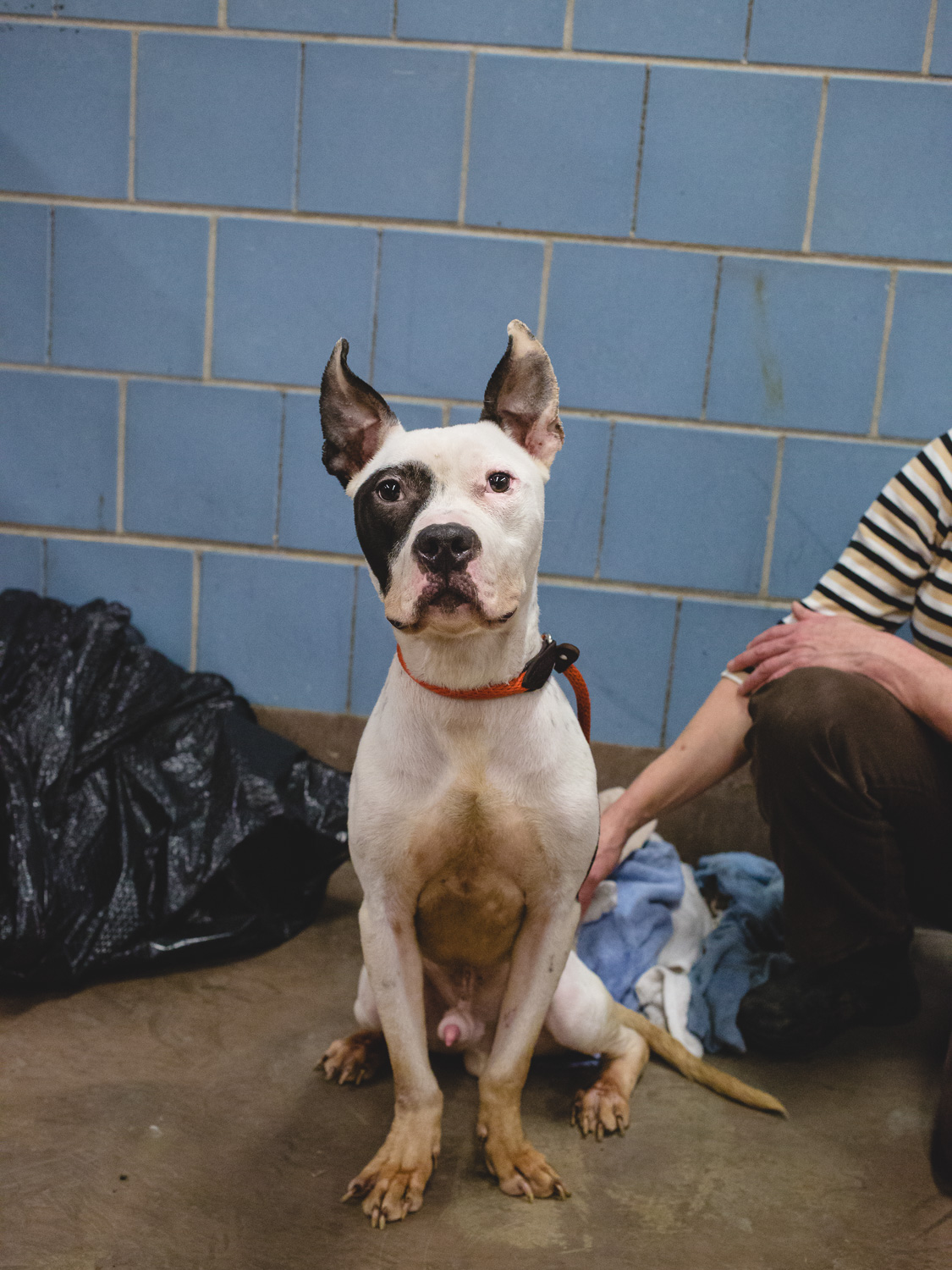 Bowie at the city's shelter