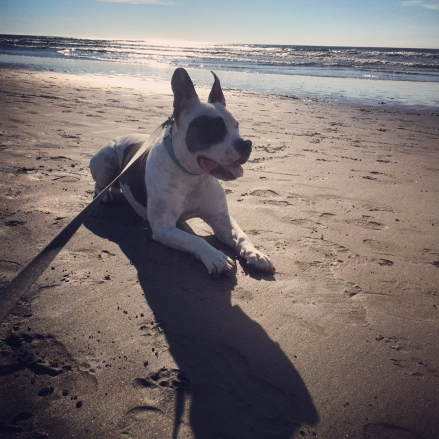 Bowie at the beach, Fort Funston SF