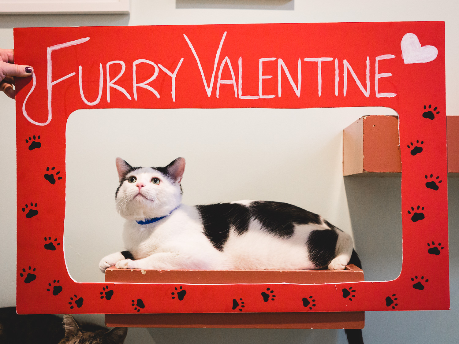 Furry Valentine Booth In Chicago