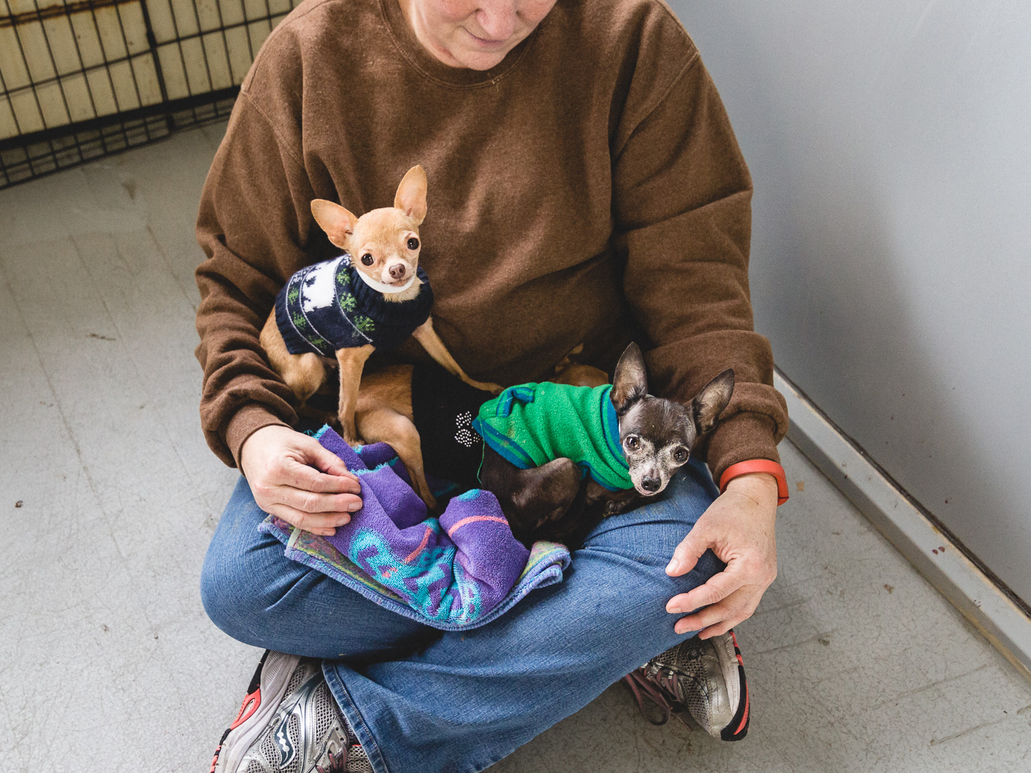 Chihuahua Family at PAWS Chicago