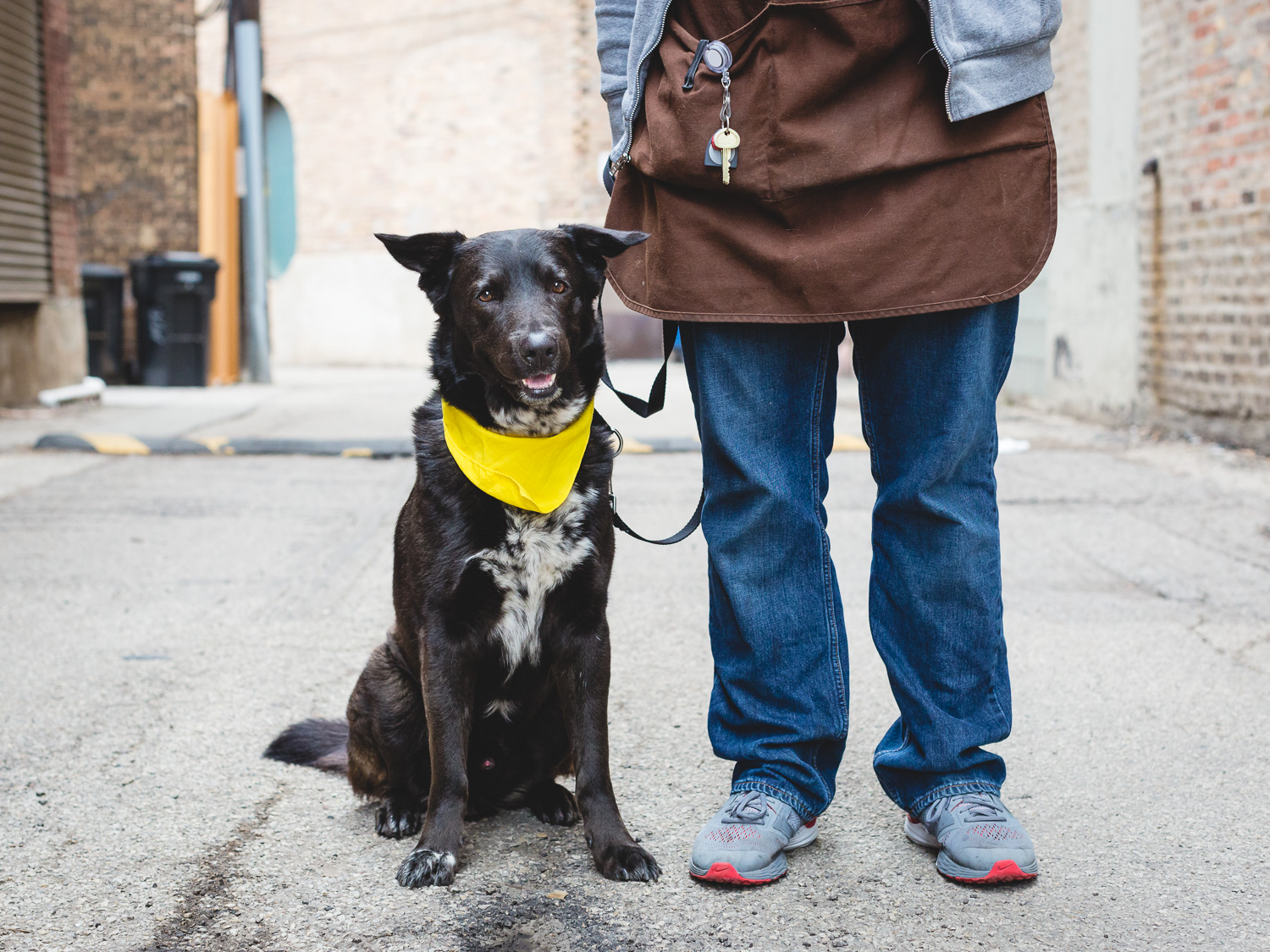 Nucky, German Shorthaired Pointer Mix