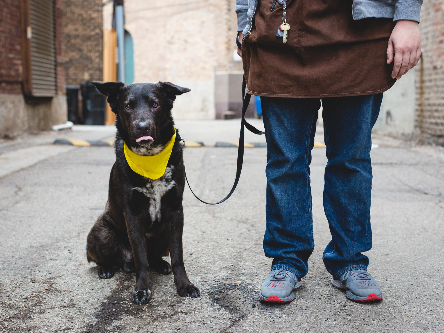 Adoptable German Shorthaired Pointer Mix At PAWS Chicago