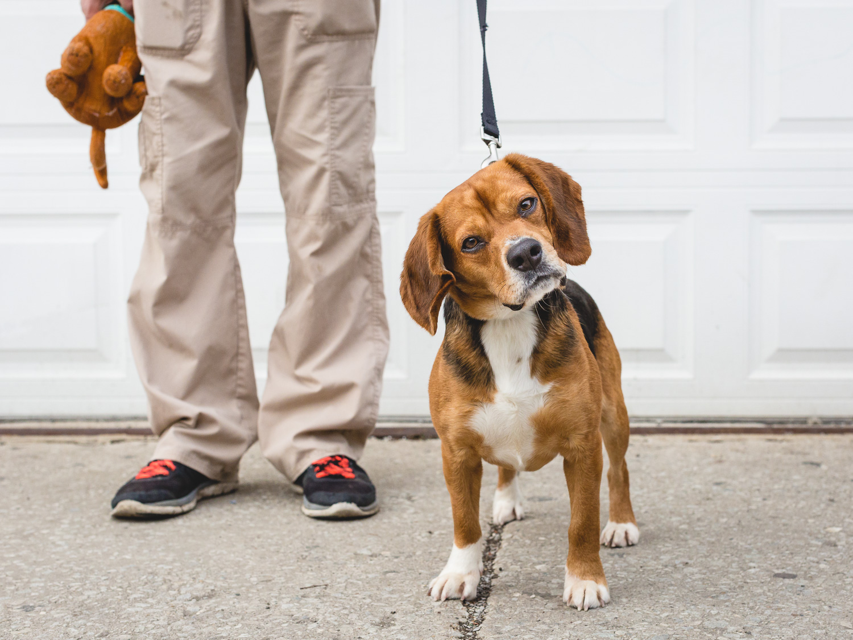 Charles, Beagle