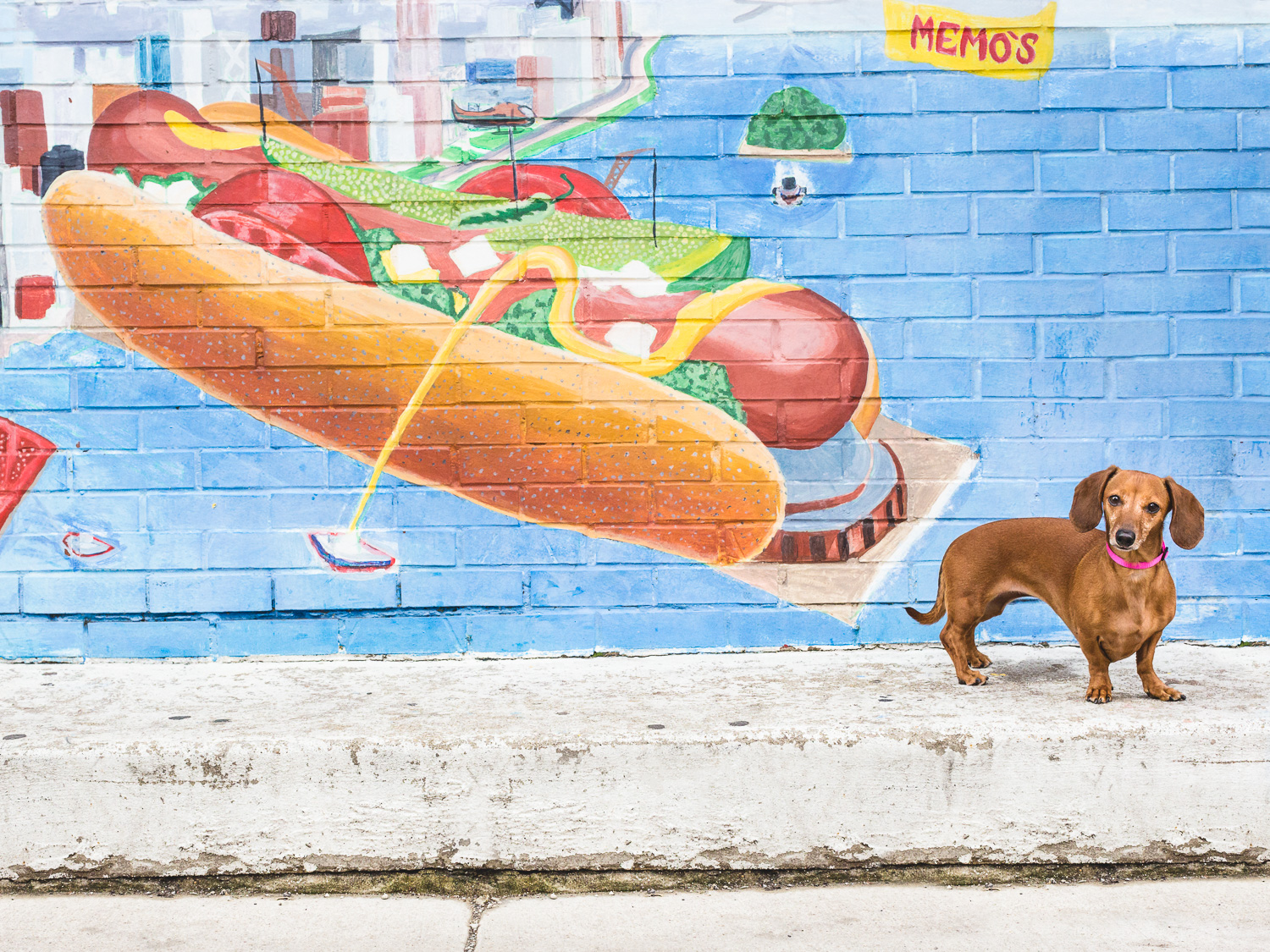 Dachshund, Chicago Dog Photographer