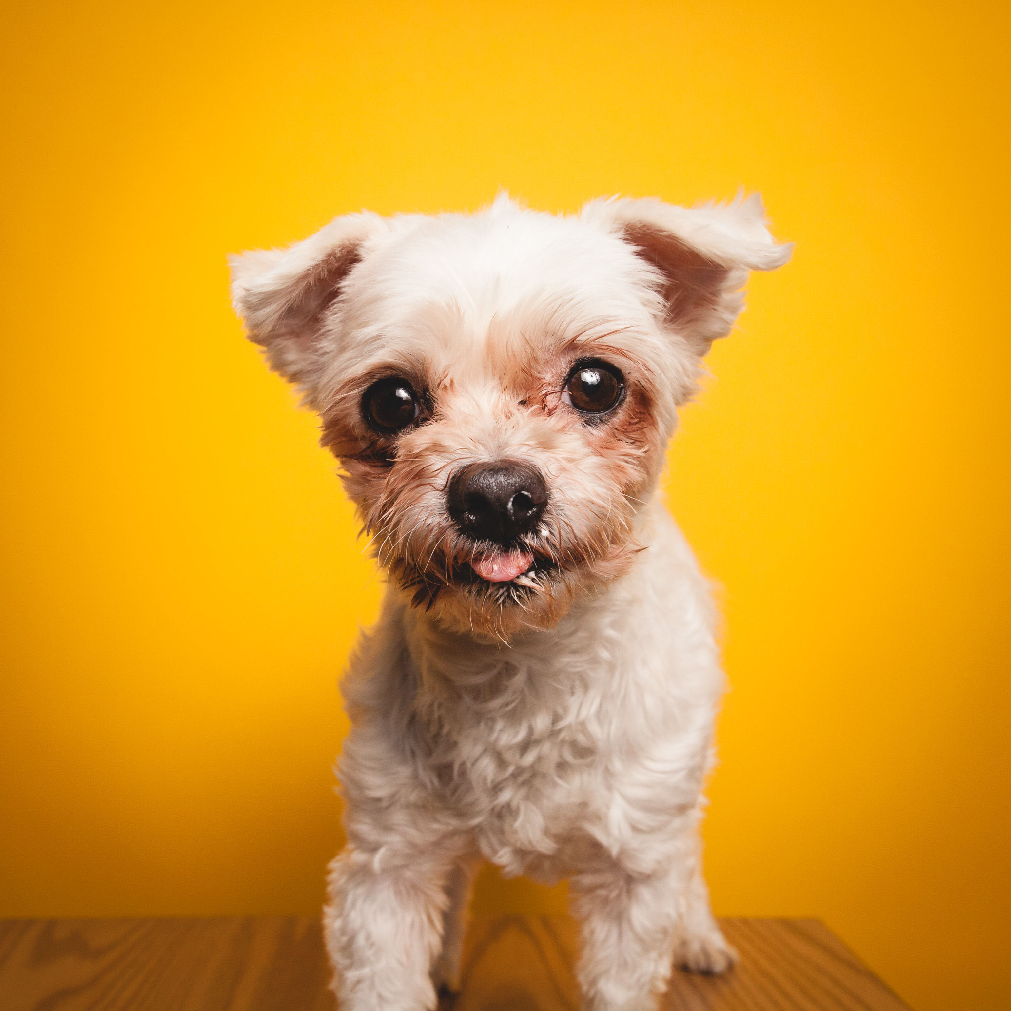 Chicago Pet Photography, PAWS Chicago