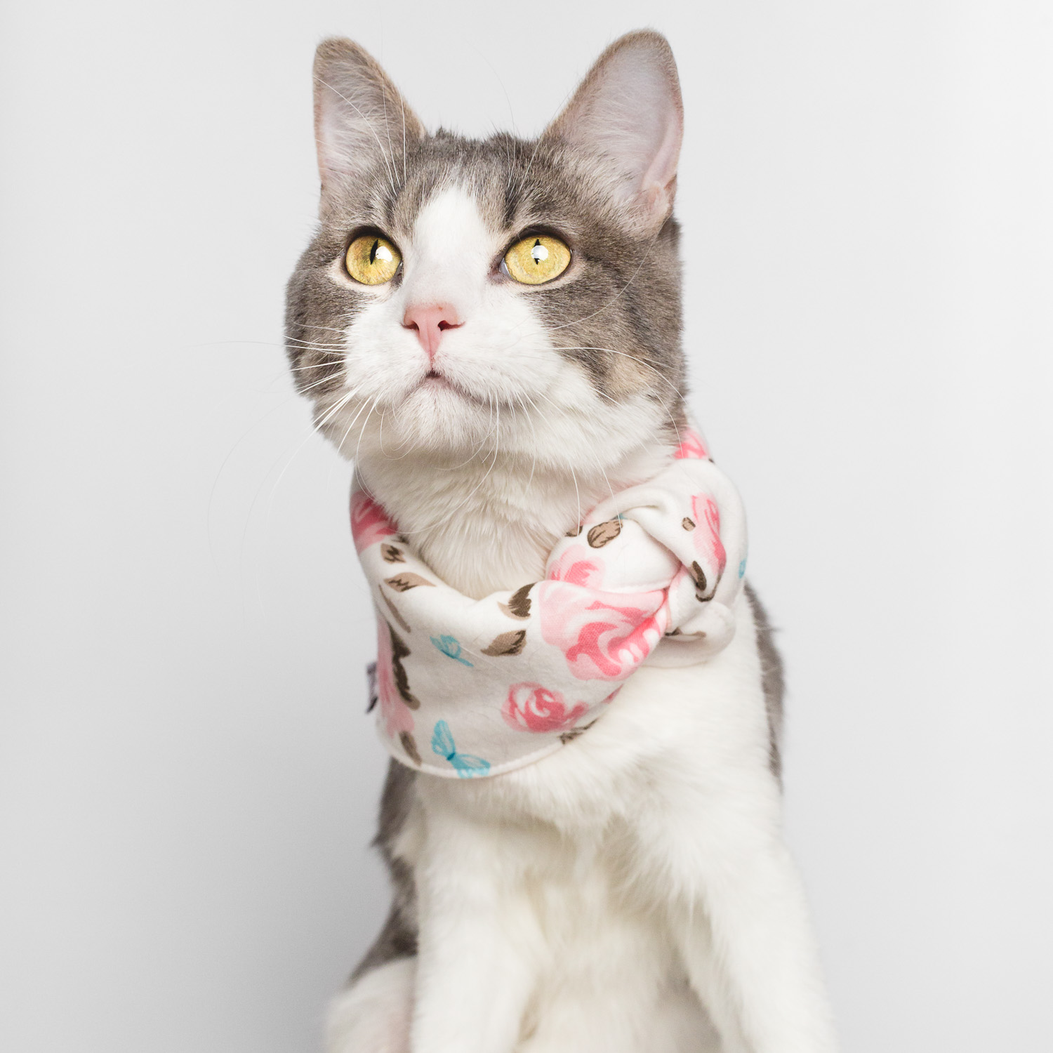 Cat portrait in Chicago by AMSTAPHY Pet Photography