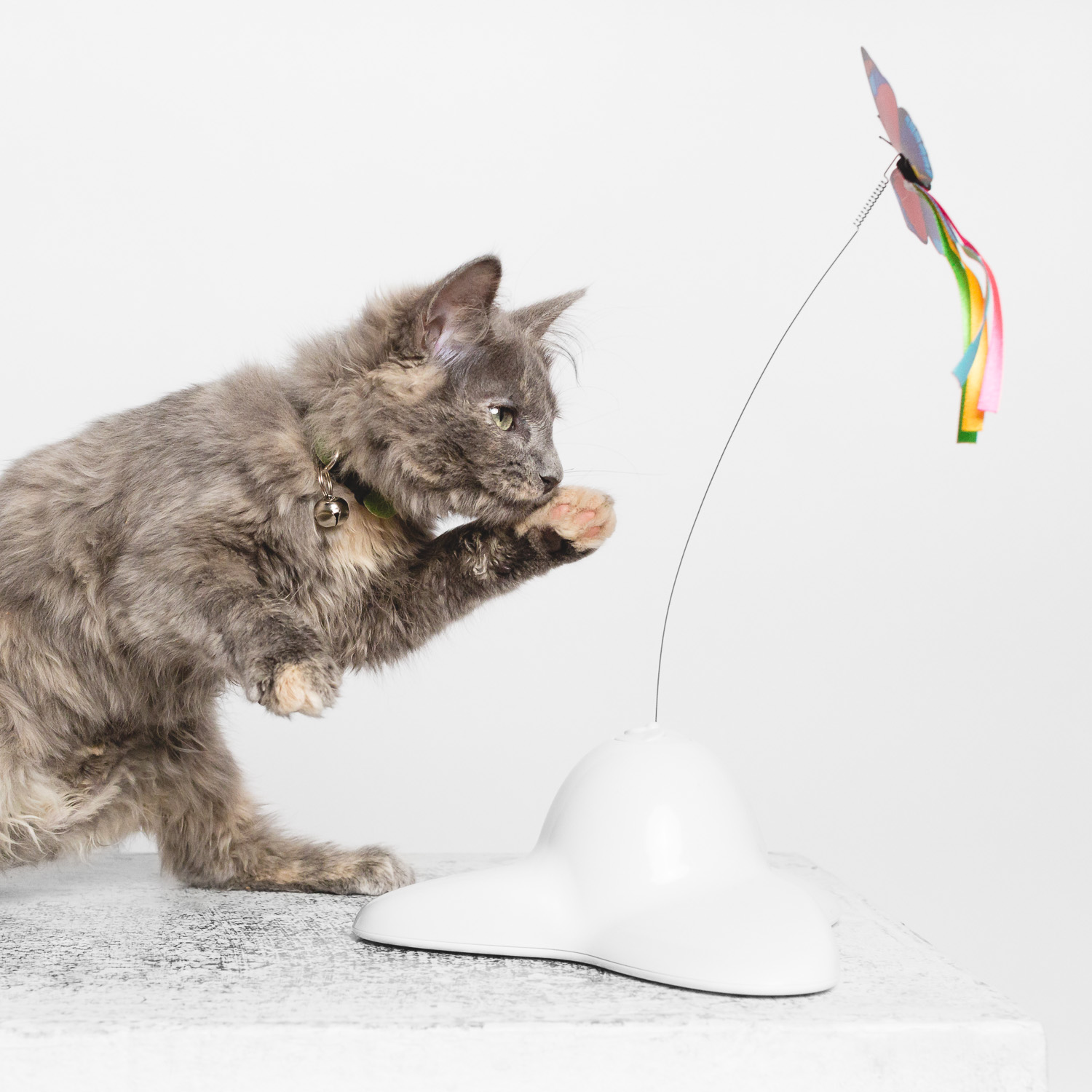 Cat playing portrait by AMSTAPHY Pet Photography