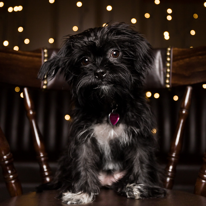 Dog photography by AMSTAPHY Pet Photography