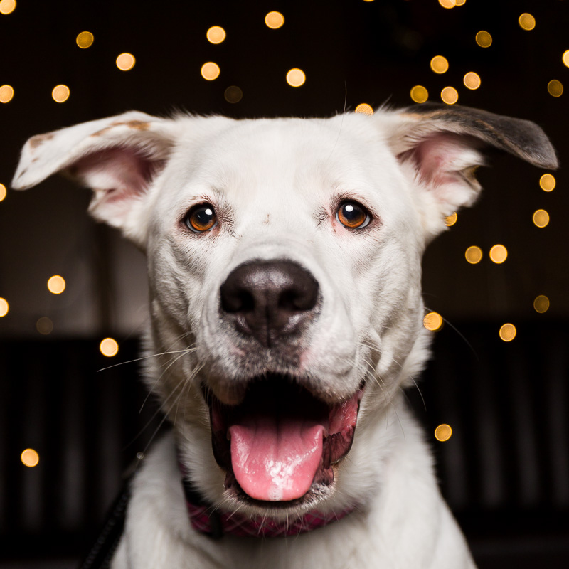 Pet photography by AMSTAPHY Pet Photography