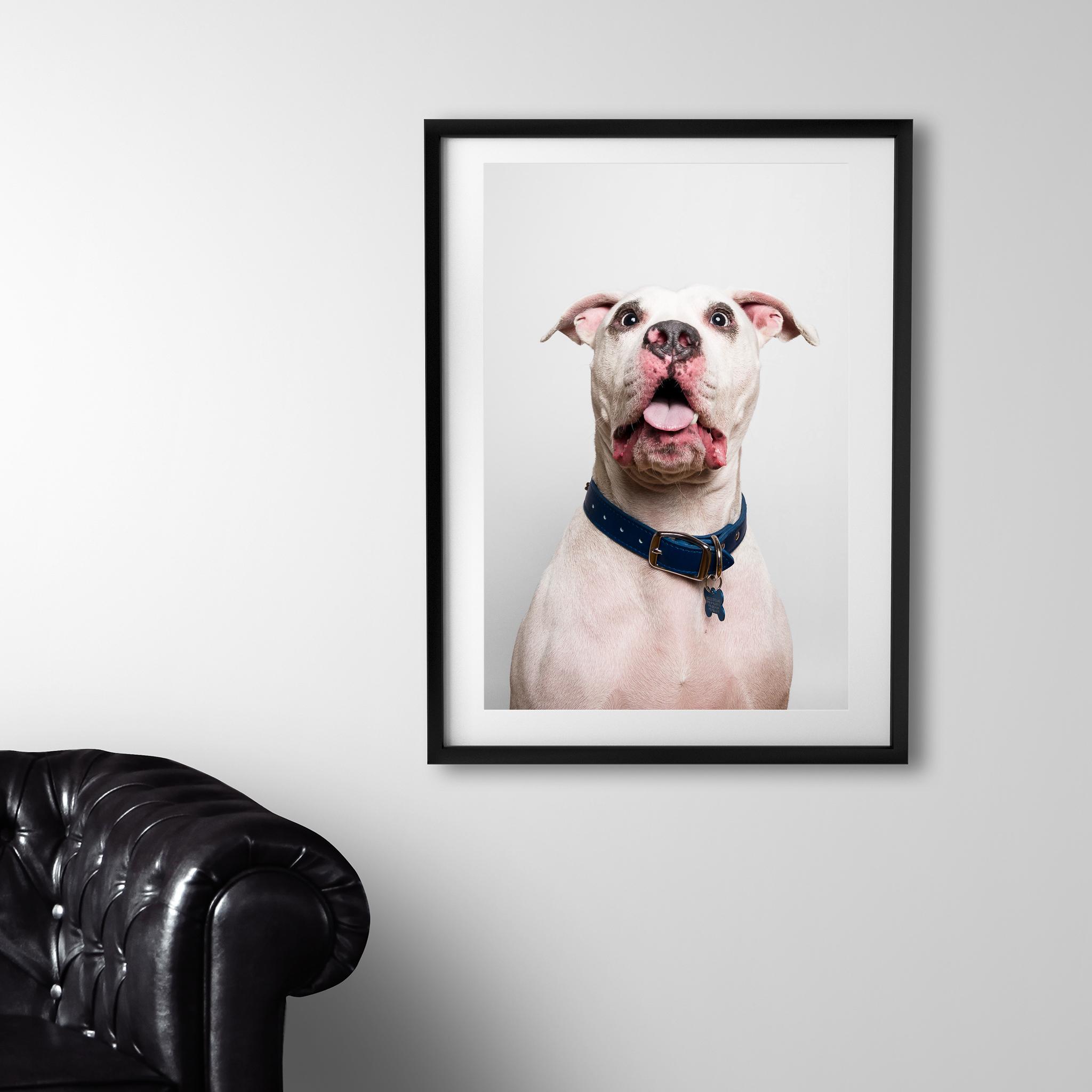 Dog photography, AMSTAPHY