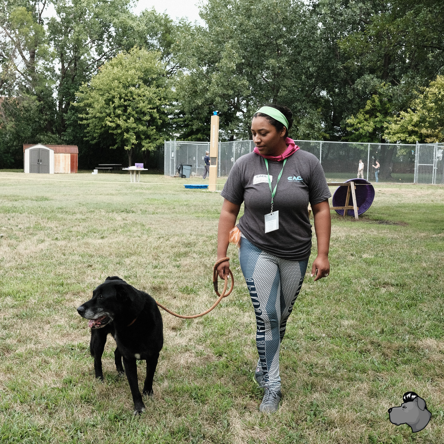 clear-the-shelters-chicago-00002.jpg