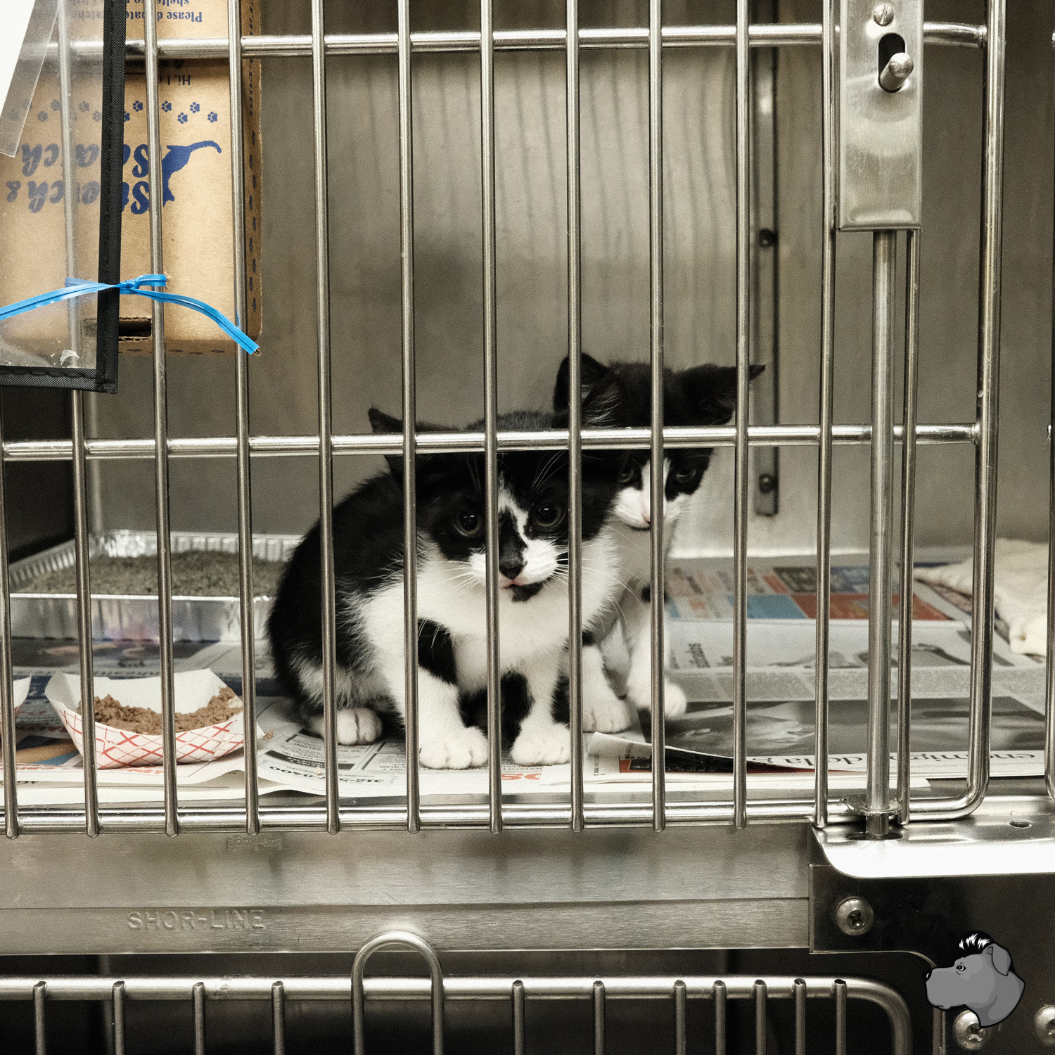 clear-the-shelters-chicago-00010.jpg