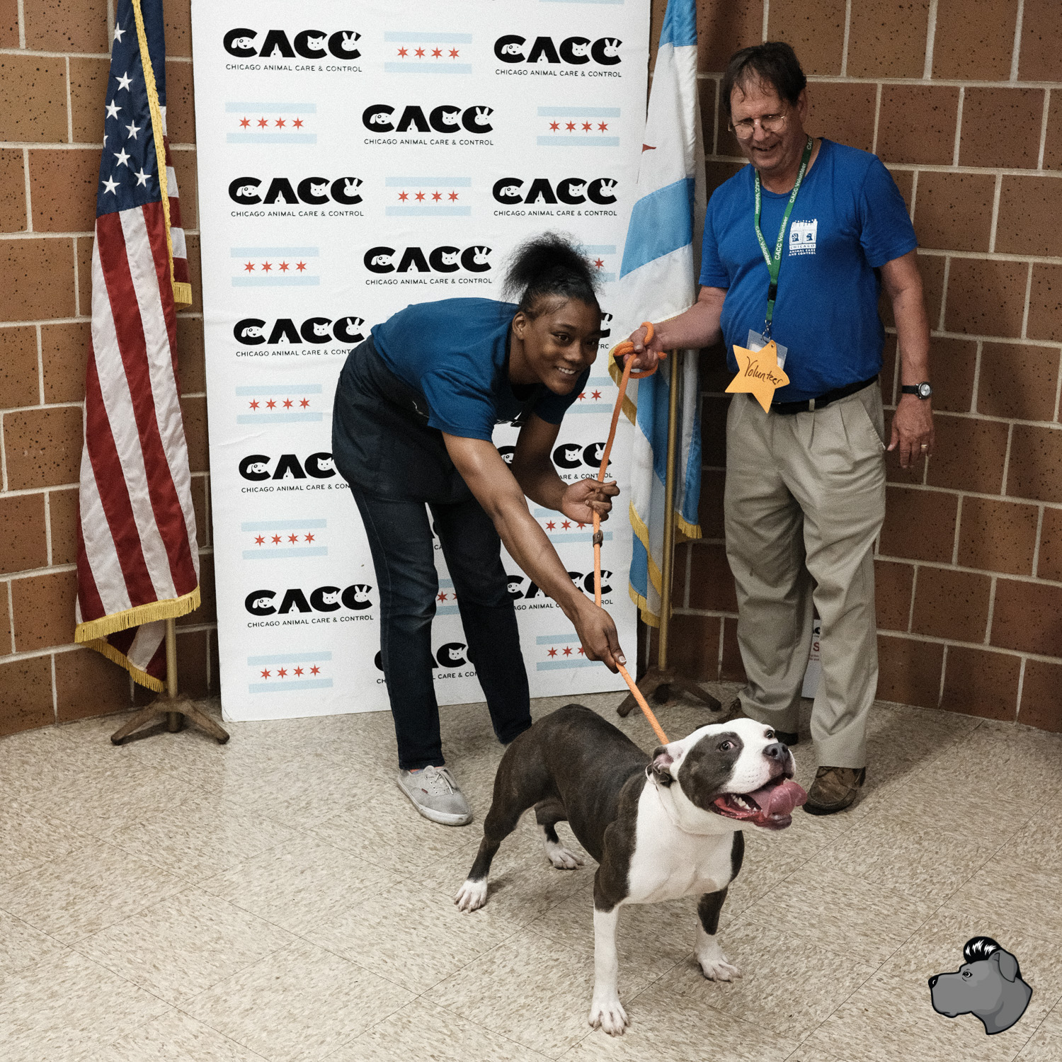 clear-the-shelters-chicago-00018.jpg