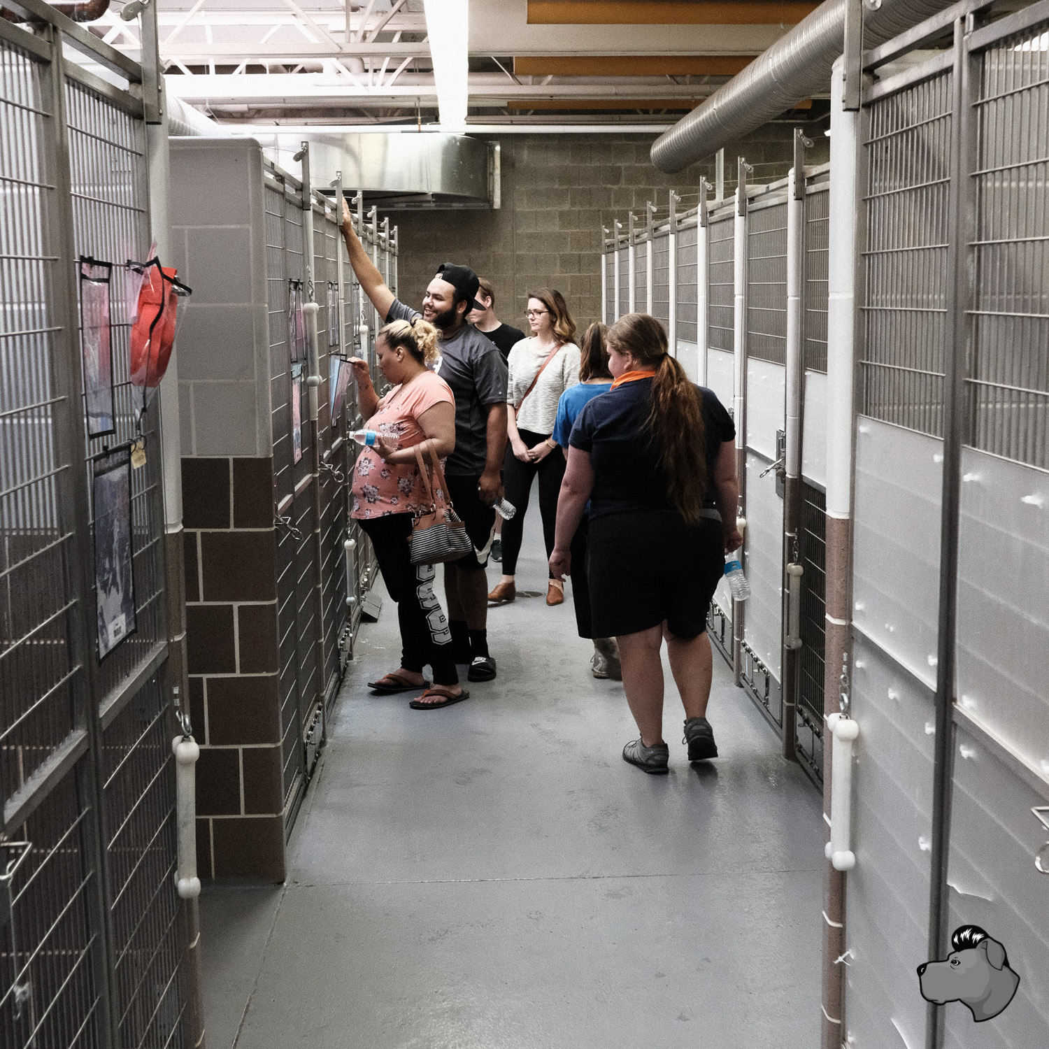 clear-the-shelters-chicago-00022.jpg